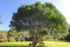 平安美丽的庭院 免版税库存图片