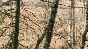 平底锅通过森林边缘 影视素材