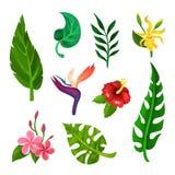 平的传染媒介套热带开花的花和绿色叶子 植物或从事园艺的题材 书的,明信片元素 库存例证
