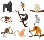 平的传染媒介套猴子的9个种类 通配的动物 电视节目预告动物园公园海报或横幅的元素  野生生物题材 向量例证