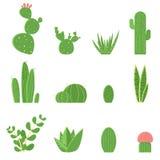 平的传染媒介套仙人掌和多汁植物 仙人掌的动画片例证 免版税库存照片