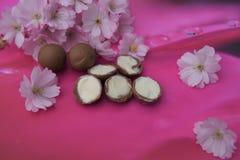平的位置用乳脂状的块菌状巧克力和新鲜的桃红色开花 图库摄影