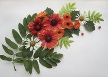 平的位置结构的天人菊属植物,金盏草,春黄菊开花, ashberry,并且花揪离开以花束的形式 库存图片