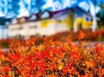 水平的充满活力的秋天房子迷离抽象 免版税图库摄影
