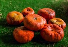 平的南瓜光滑的特写镜头 葡萄酒秋天橙色果子的背景依据在绿色的 免版税库存照片