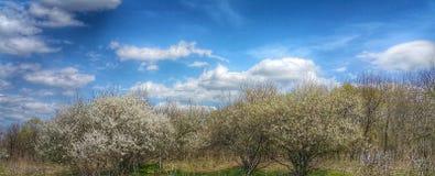 平的地形壮观的风景  原野的秀丽 不尽的草甸 在新鲜空气的步行 清洗在蓝色的自然 免版税图库摄影