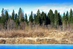 水平的春天森林河风景背景 库存图片