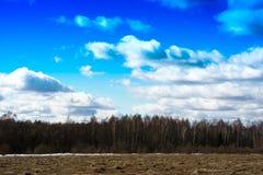 水平的春天森林风景背景 免版税库存照片