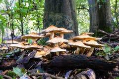 平的朝向的蘑菇 库存照片
