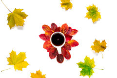 平的构成茶与在白色背景隔绝的红色和黄色秋天槭树叶子的 免版税库存照片
