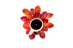 平的构成茶与在白色背景隔绝的红色秋叶的 库存照片
