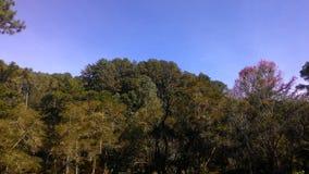 水平的树&的天空 库存图片