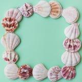 平的白色桃红色棕色海壳在浅绿色的绿松石柔和的淡色彩背景的框架安排了 复制空间,卡片的,岗位模板 免版税库存图片