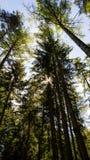 从水平的看法下面的森林在明亮的天 库存照片