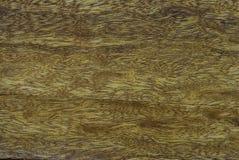 自然木纹纹理 图库摄影