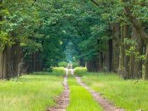 平直长期森林的运输路线 免版税库存照片
