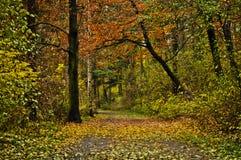 水平秋天的叶子 免版税图库摄影