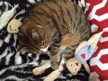 平纹与玩具熊的男孩猫 免版税库存照片