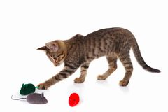 平纹小猫演奏与在白色背景的一只红色,灰色和绿色玩具老鼠 库存图片