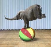 平衡在一个五颜六色的球的大象 免版税库存照片