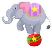 平衡在球的灰色大象 库存图片