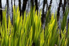 平衡点燃的厚实的植物生长太阳 免版税图库摄影