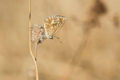 平衡的小精美蝴蝶 免版税图库摄影