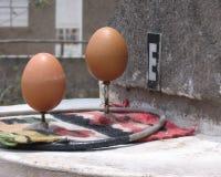 平衡的鸡蛋 免版税库存照片