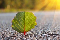 平衡绿色叶子星期日 免版税库存照片