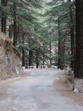平静和平安的森林公路 库存照片