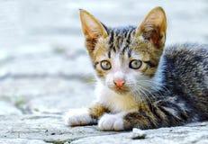 平静地坐的逗人喜爱的猫 免版税图库摄影