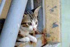 平静地坐的逗人喜爱的猫 免版税库存图片