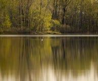 平静森林的场面 免版税库存照片
