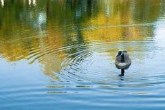 平静池塘的场面 免版税图库摄影