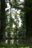 平静沼泽 库存图片
