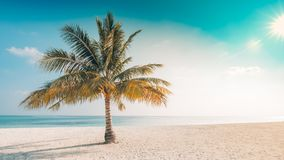 平静海滩的场面 背景或墙纸的异乎寻常的热带海滩风景 暑假假日概念设计  免版税库存照片
