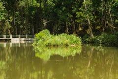 平静的公园池塘和它的反射由树surronded 库存图片