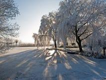 平静的冬天场面 免版税库存照片