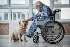 平静的前辈desiabed宠爱猎犬的人户内 库存照片