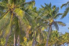 平静的加勒比海滩 库存图片