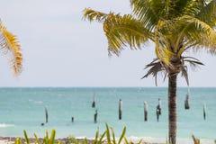 平静的加勒比海滩 免版税库存照片