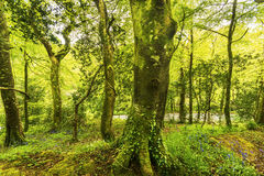 平静的小路在森林里 免版税库存图片