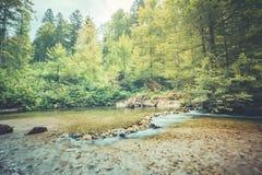 平静的山河 镇静水表面和绿色杉树森林 库存图片