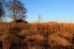 平静的日落在公园 图库摄影