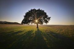 平静的日落 库存图片