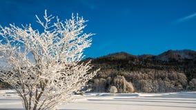 平静的树雪风景山 库存照片