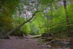 平静的森林地小河 免版税图库摄影