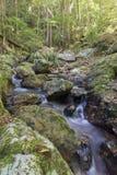平静的森林小河 免版税库存照片