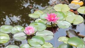平静的池塘 股票录像