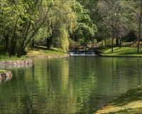 平静的池塘 免版税库存照片